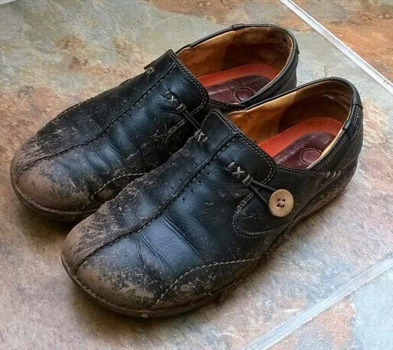 Скорпионы к чему снится гразная обувь это вовсе