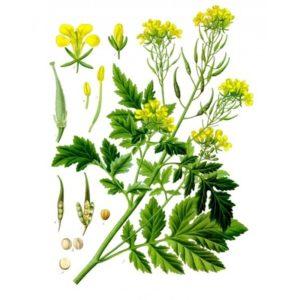 Семена растений - источник жизни и здоровья.