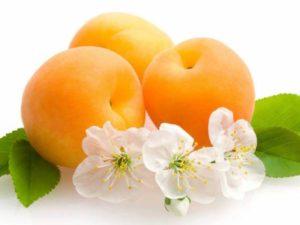 Масло абрикосовых косточек - настоящая лаборатория красоты.