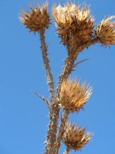 Травы-обереги, которые растут рядом с нами.